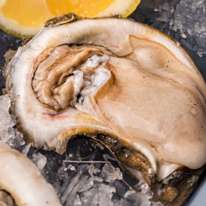 raw oyster on ice with lemon wedge